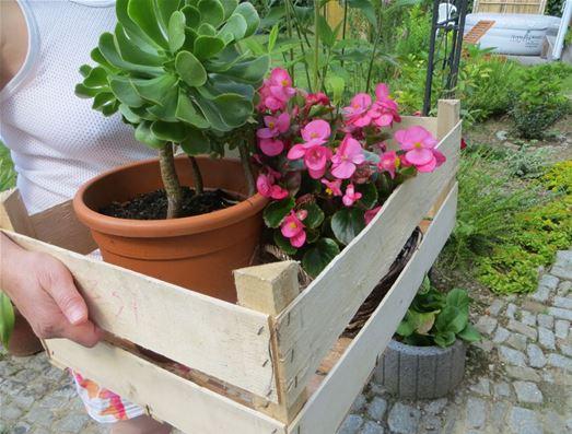 gartenpflanzen umzug